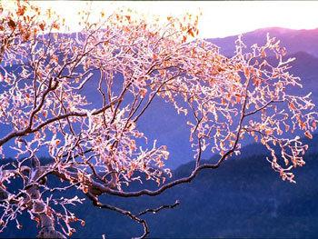 Растительные композиции Японского сада